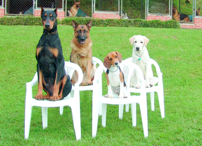 Dog training centre in ranchi