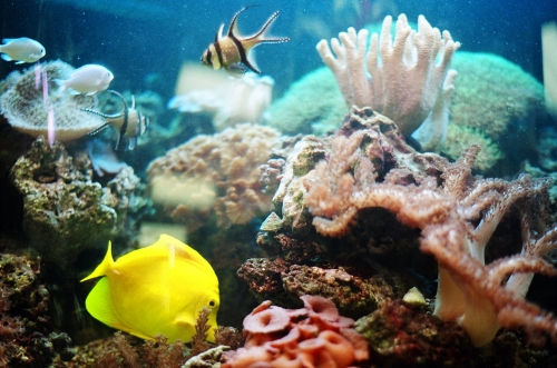 BADROOM AQUARIUM IN RANCHI