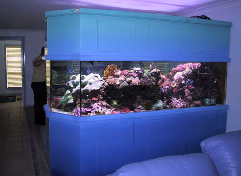 BANGLOW & OFFICE AQUARIUM