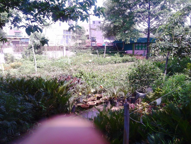 WHOLESALE RETAIL ALL KINDS OF PLANT IN RAMGARH
