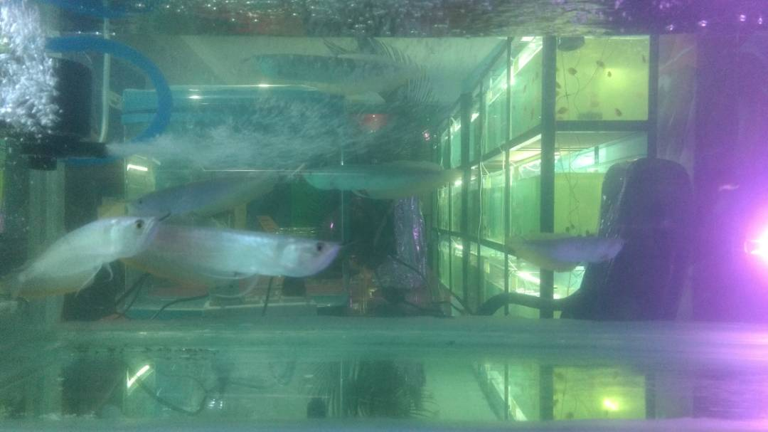 BEST AQUARIUM PROVIDER IN RANCHI