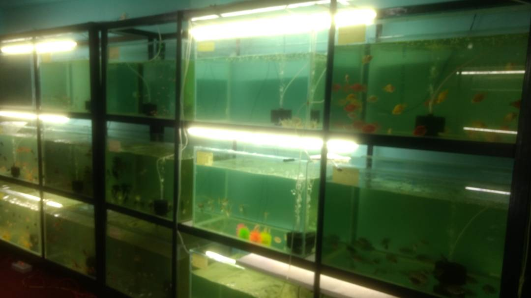 ALL TYPES OF FISH AQUARIUM IN RANCHI