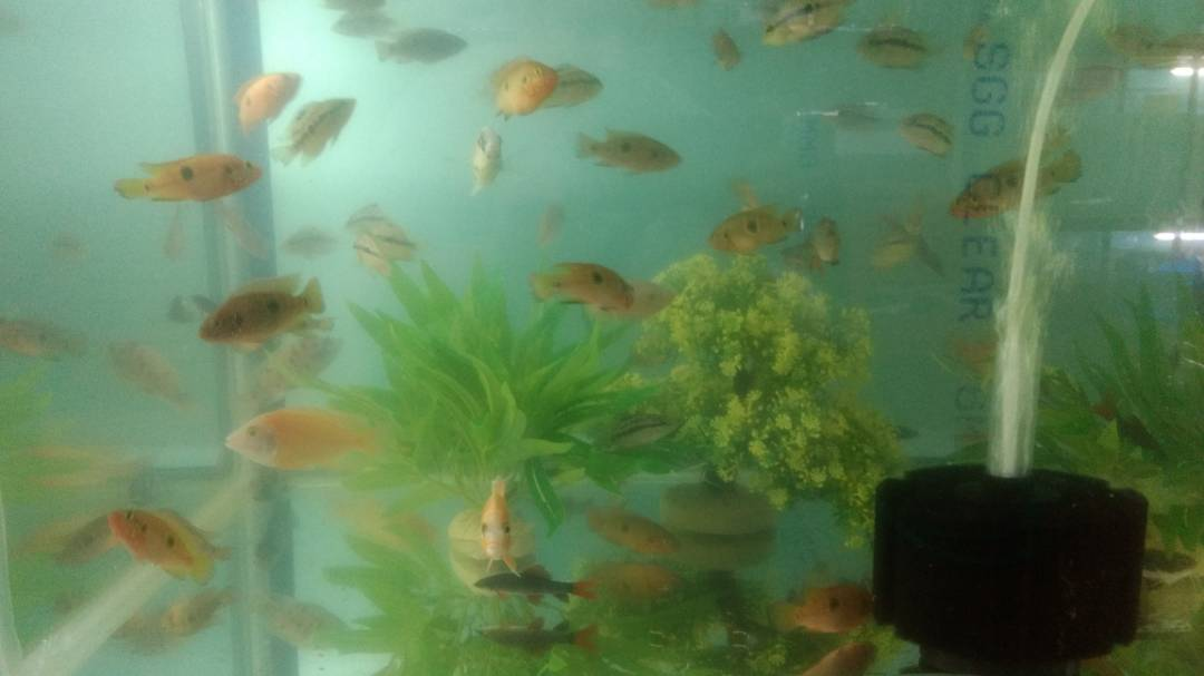 AQUARIUM SHOP IN BOKARO