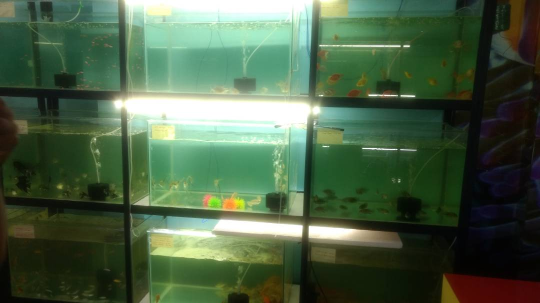 BEST AQUARIUM HOUSE IN RANCHI