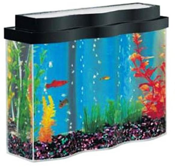 BEST FISH AQUARIUM AQUARIUM SHOP